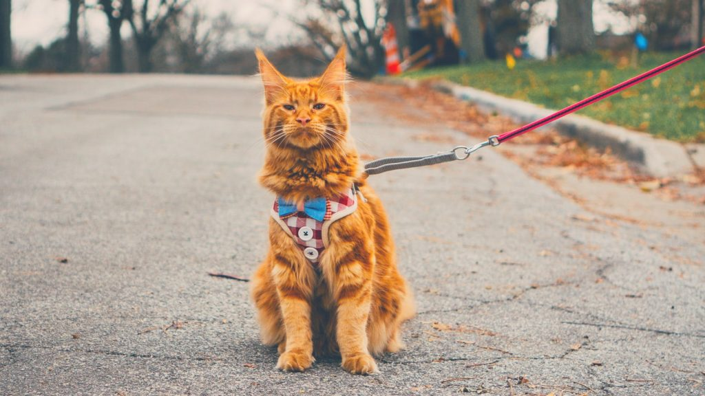red hair cat sitting wearing harness - best cat harness no escape