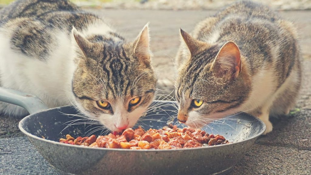 two cats are eating the best cheap cat food