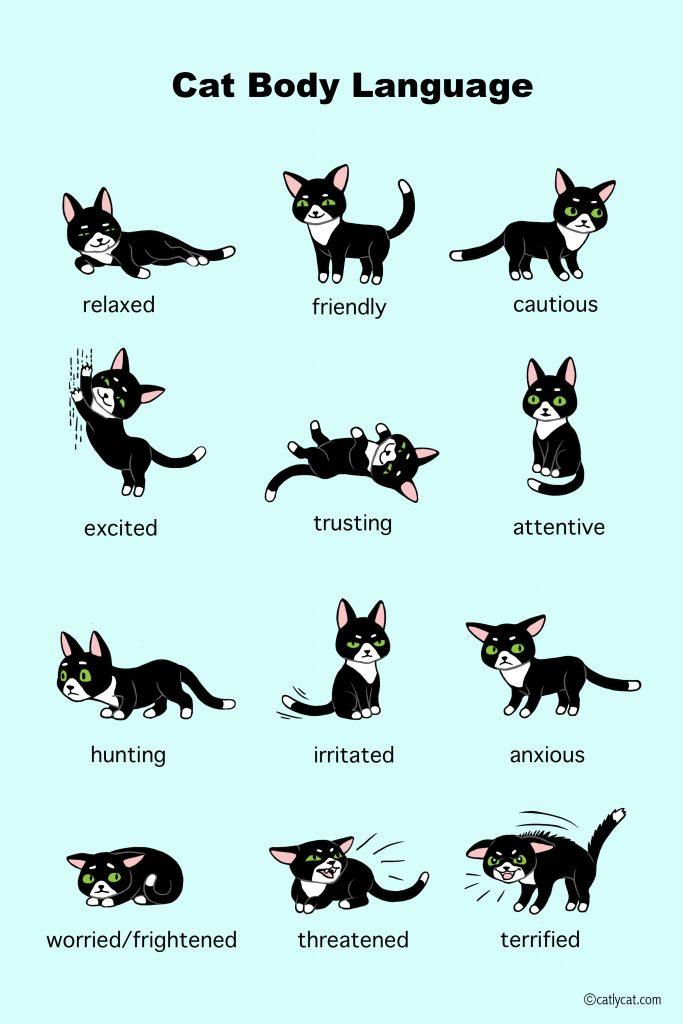 cat body language infographic