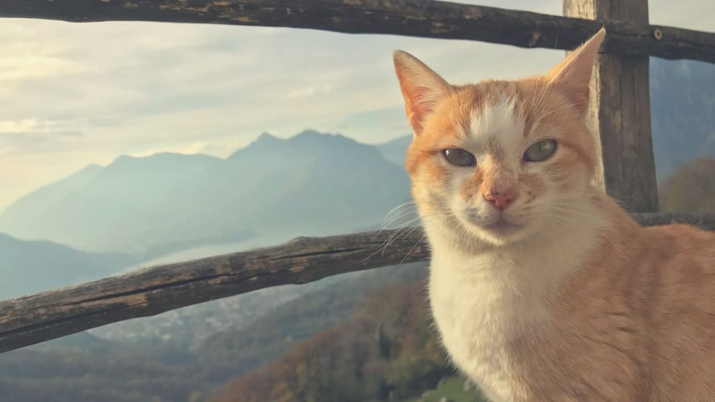 cat is sitting outdoors in the mountains