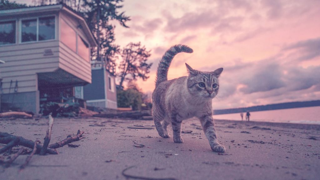 cat is walking on the beach