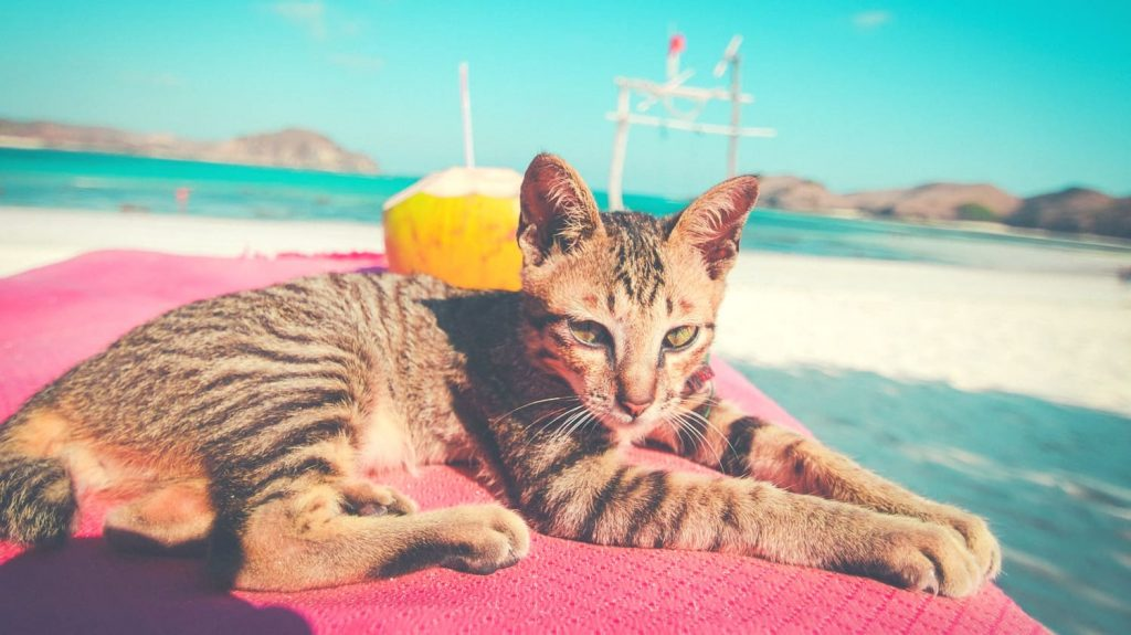 cat is lying on the beach