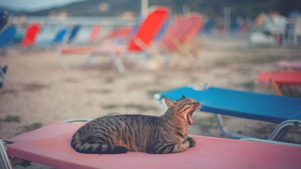 cat is lying on the beach and yawning