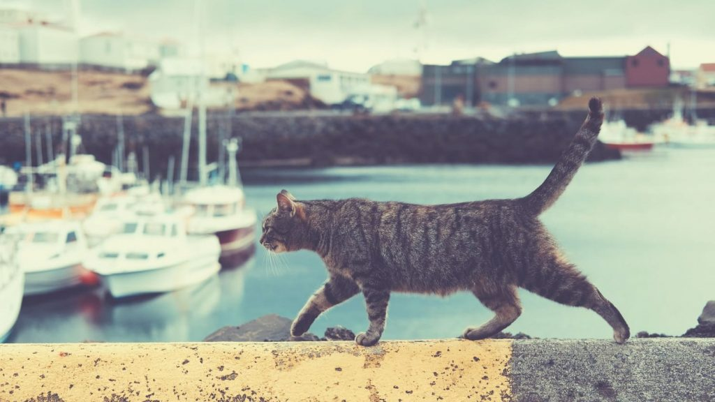 how to travel with cat - cat walking in the port