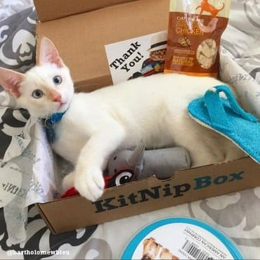 white cat in a kitnipbox