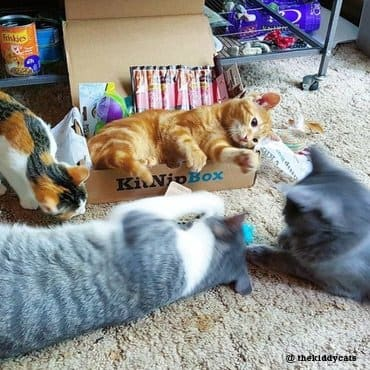 three cats are playing with kitnipbox toys and treat