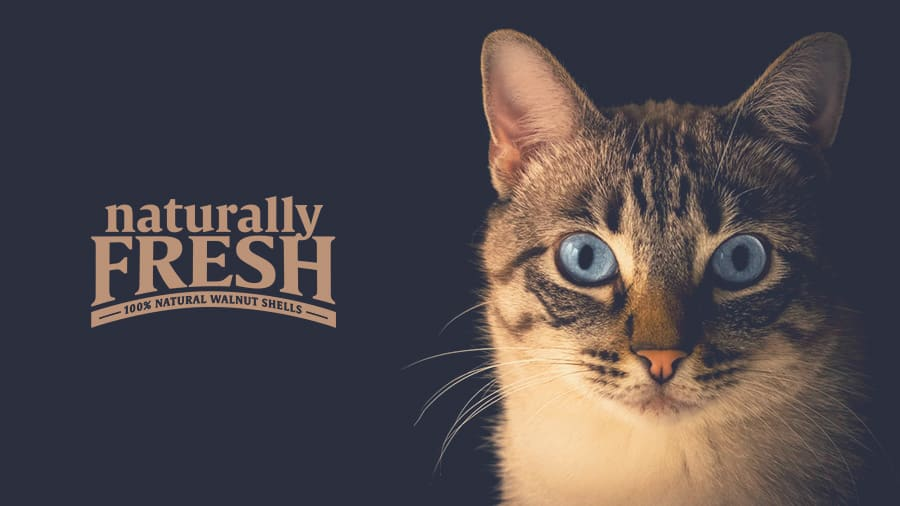 naturally fresh cat litter review